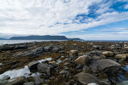Rocks and seaweed in the province of Newfoundland and Labrador